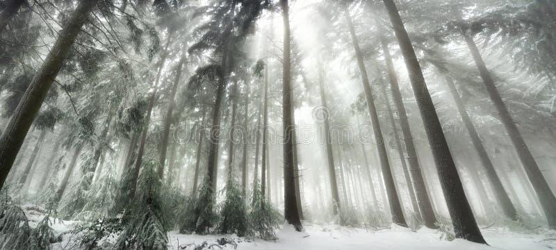 Dold skog för snö med magiskt ljus arkivbilder