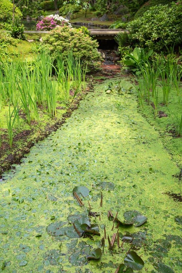 Dold ström för alger royaltyfri fotografi