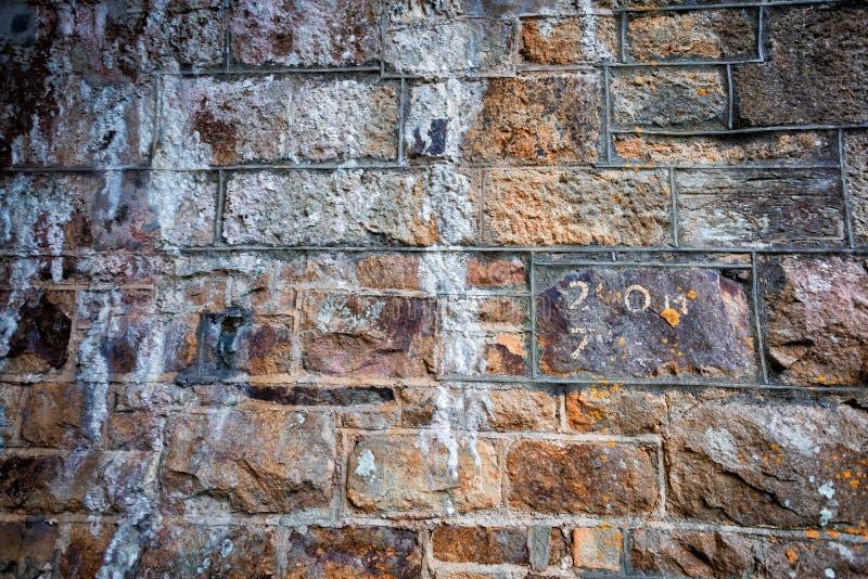 Dold vägg för lav arkivfoton
