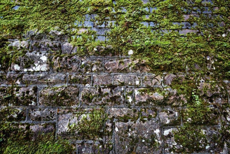 Dold vägg för lav royaltyfria foton