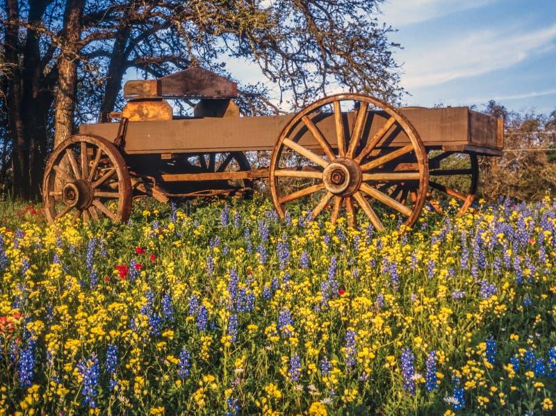 Dold vagn i det Texas Hill landet royaltyfri bild