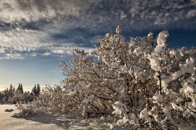 Dolda alar för Snow arkivfoton