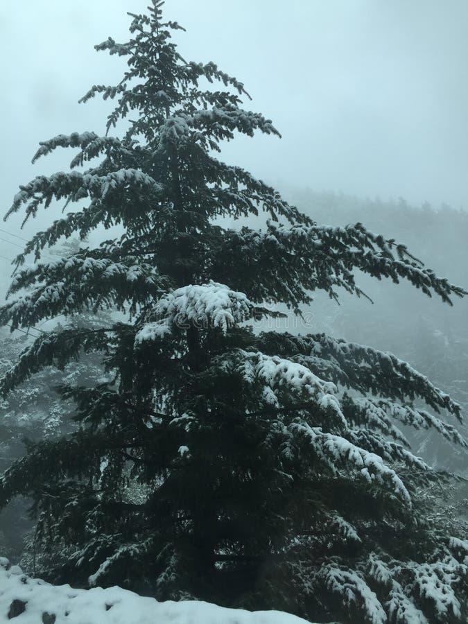 dolda branchs för snö royaltyfri foto