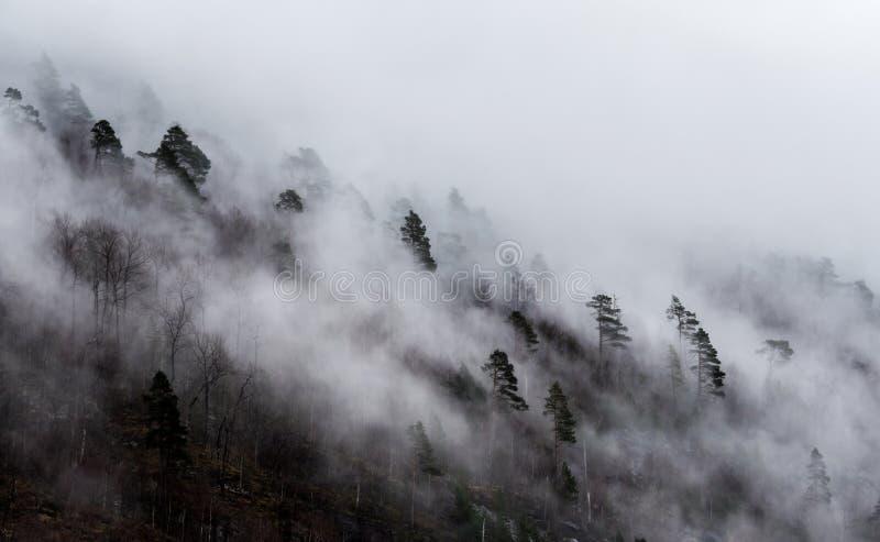 Dolda träd för dimma royaltyfri foto