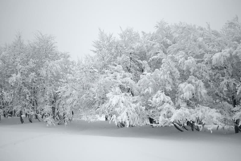 Dolda träd för snö fotografering för bildbyråer