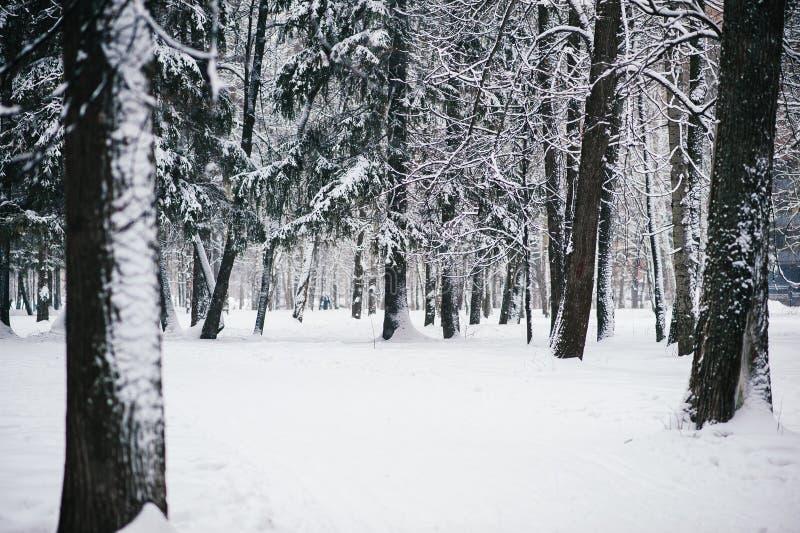 Dolda tr?d f?r sn? i vinterskogen royaltyfri fotografi