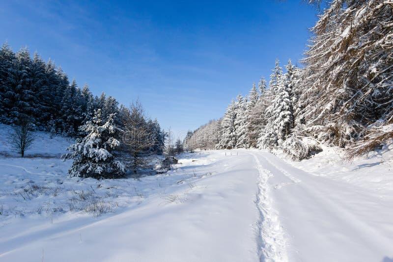 Dolda trees för Snow i vinter royaltyfria foton