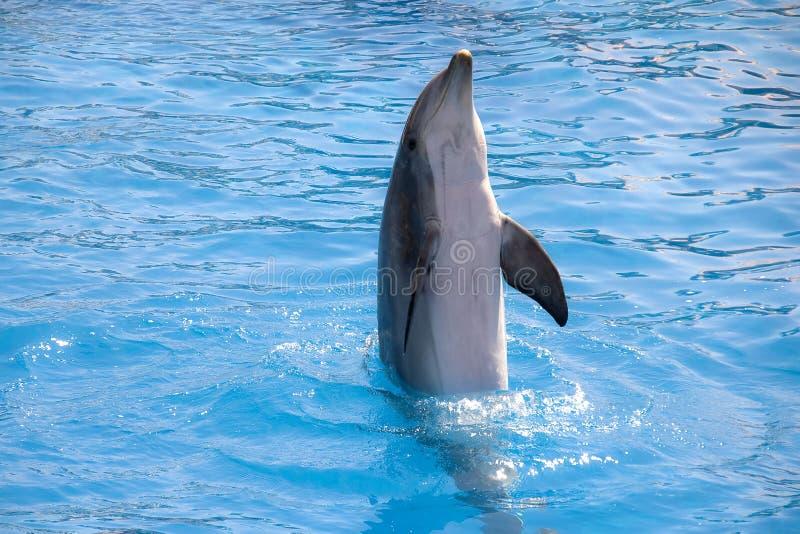 Download Dolfijn stock afbeelding. Afbeelding bestaande uit life - 10779861