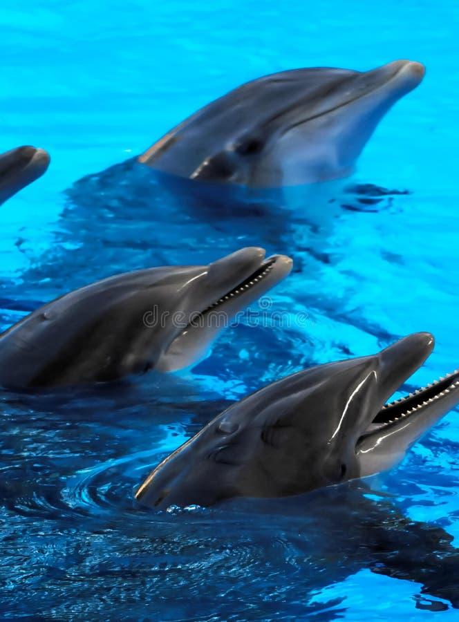 dolfijn in blauw water, digitaal fotobeeld als achtergrond royalty-vrije stock foto's