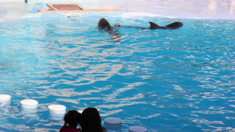 Dolfijn die in het Overzees van Sharm el Sheikh zwemmen stock afbeelding