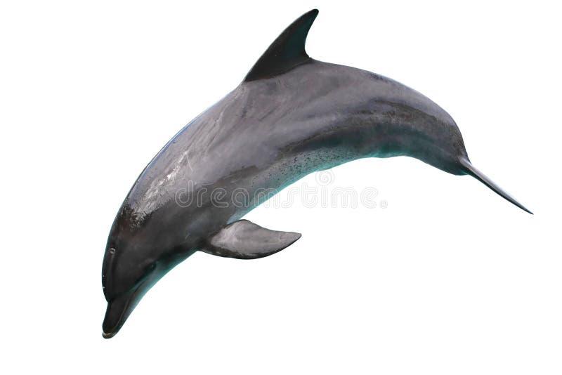 Dolfijn die op Witte Achtergrond wordt geïsoleerdd stock afbeelding