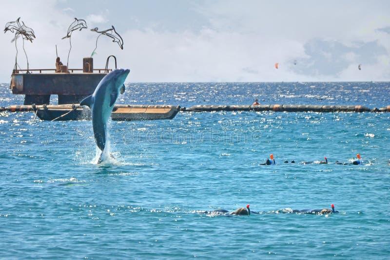Dolfijn die uit het overzees dichtbij de mensen springen Snorkelend in het Rode Overzees, Dolfijnertsader, Israël stock foto's