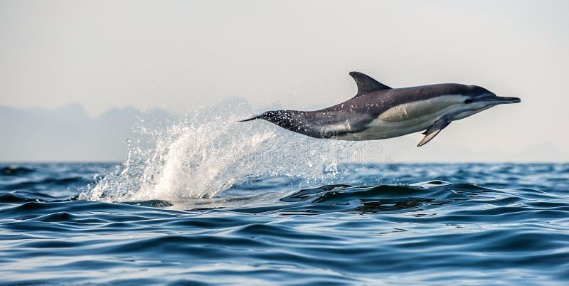 Dolfijn die uit water springt De Long-beaked gemeenschappelijke dolfijn stock foto
