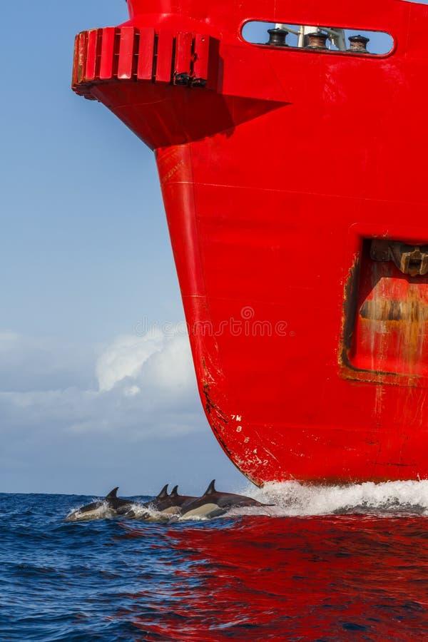 Dolfijn en rood vrachtschip stock foto's