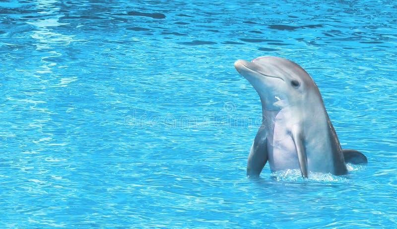 Dolfijn gelukkig op overzees stock afbeelding