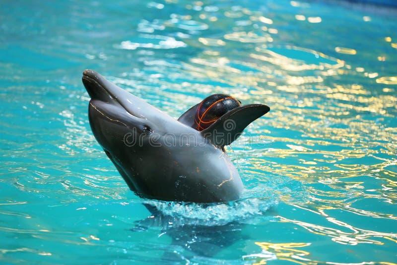 Dolfijn het spelen met een bal royalty-vrije stock foto's