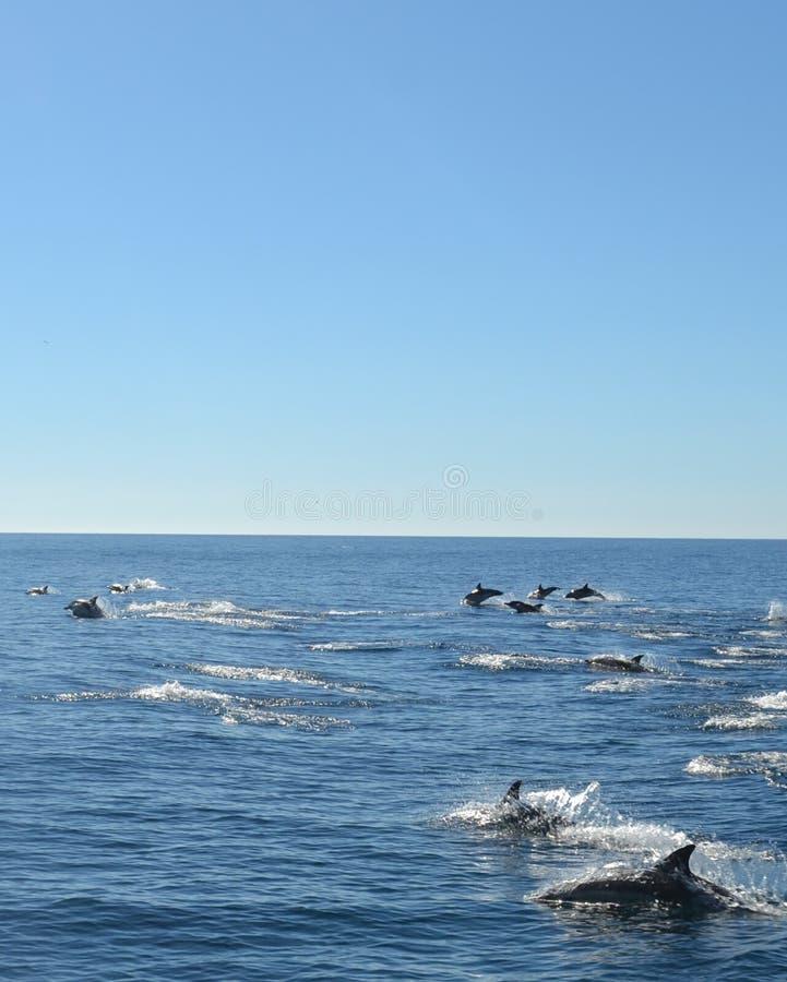 Dolfijncircus royalty-vrije stock foto's
