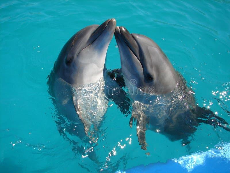 Dolfijnen stock afbeelding