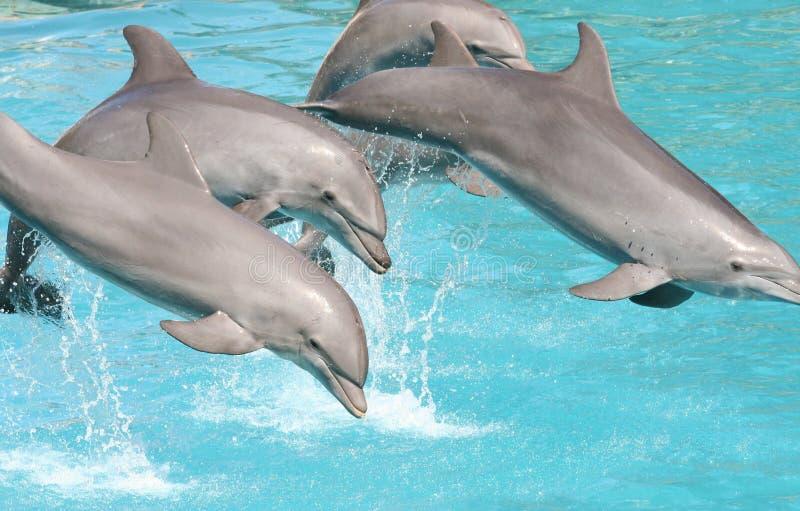 Dolfijnen royalty-vrije stock foto's