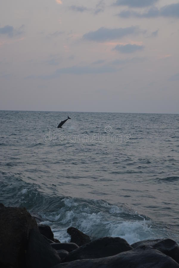 Dolfijnen bij Rode Overzees Jeddah royalty-vrije stock foto