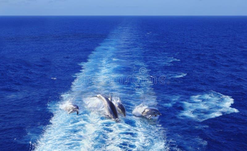 Dolfijnen die in blauwe oceaan springen stock fotografie