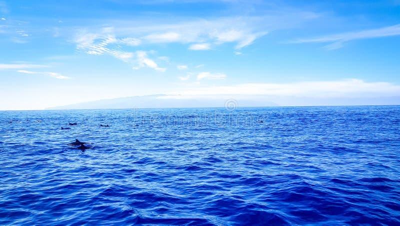 Dolfijnen die in de Atlantische Oceaan voor Los Gigantes zwemmen, Canarische Eilanden, Tenerife royalty-vrije stock afbeeldingen