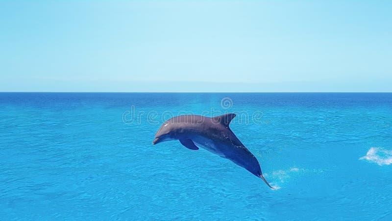 Dolfijnen zwemmen, die op blauwe oceaanwolk, mariene het wildachtergrond springen royalty-vrije stock afbeeldingen