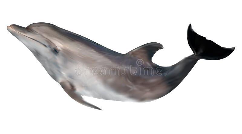 Dolfijnillustratie op wit wordt geïsoleerd dat royalty-vrije illustratie