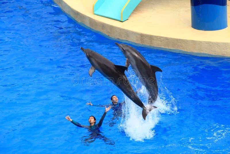 Dolfijnprestaties stock afbeelding