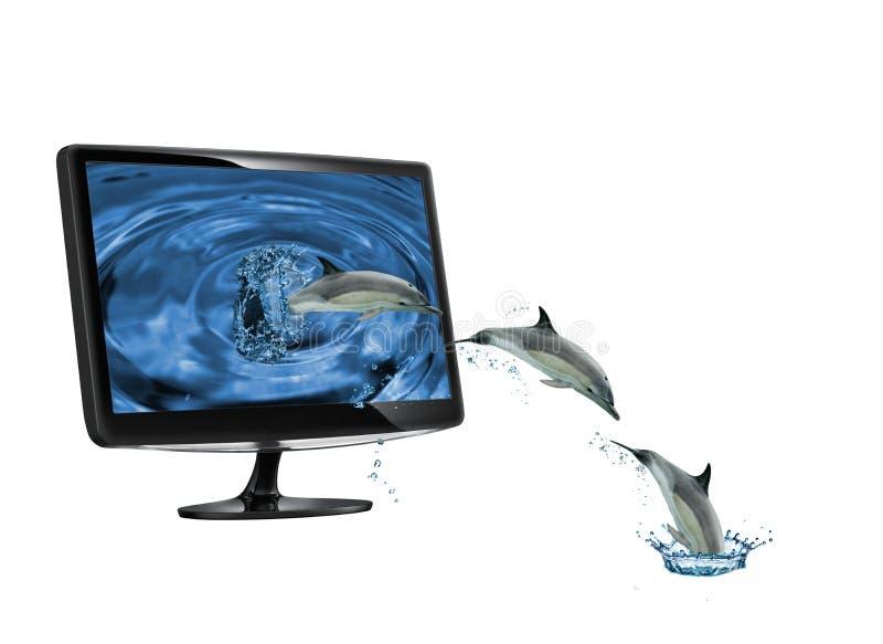 Dolhpins que escapa un monitor foto de archivo libre de regalías