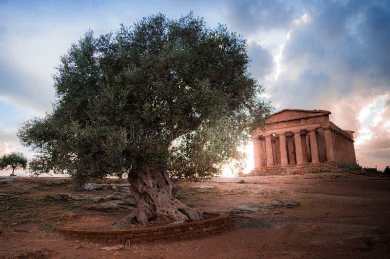 Dolina świątynie Agrigento, Sicily - zdjęcie royalty free