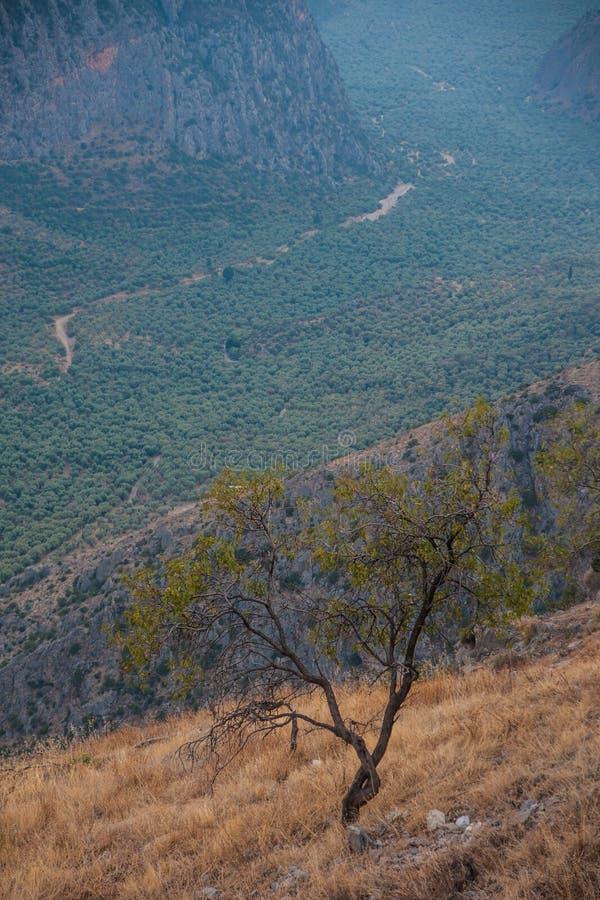 Dolina blisko Delphi zdjęcie stock