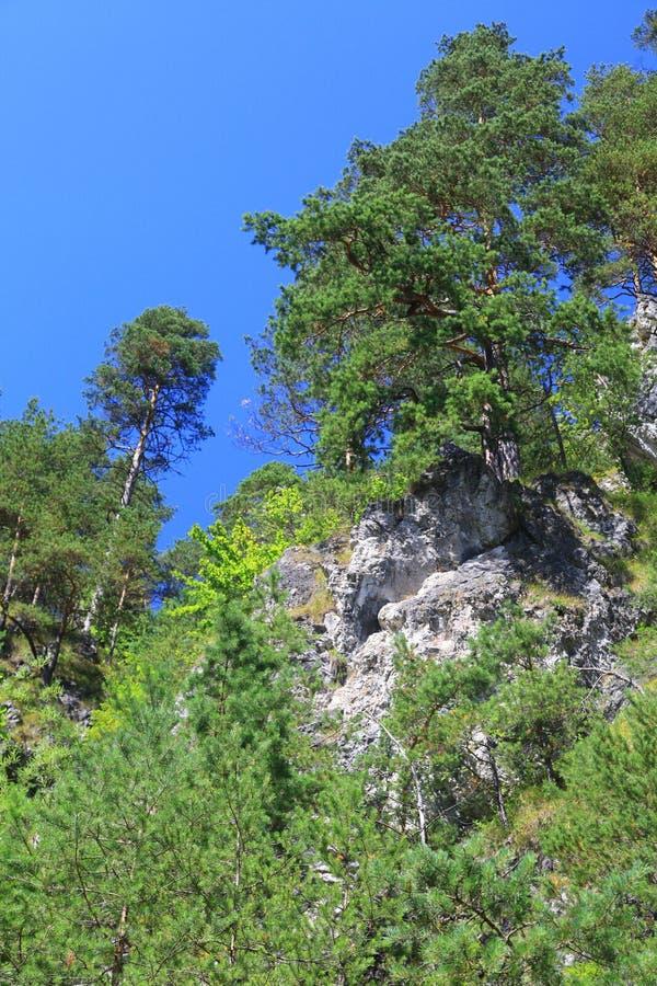 Dolina de Kvacianska - vale na região Liptov, Eslováquia imagem de stock royalty free