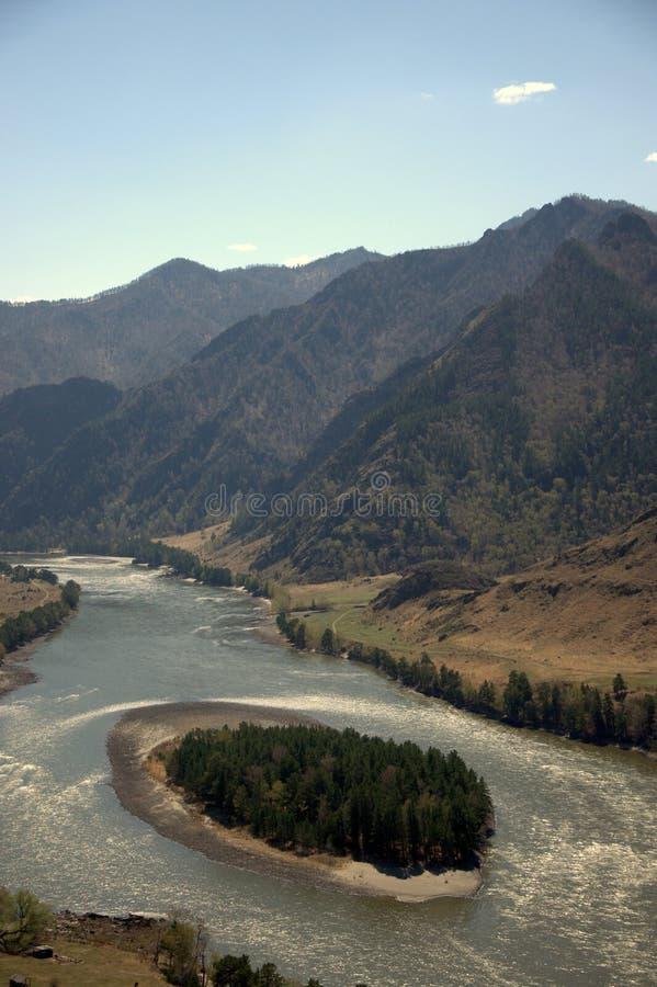 Dolina halni duchy w Altai górach, Katun zaokrągla piaskowatą wyspę zakrywającą z iglastym lasowym Altai, obrazy royalty free