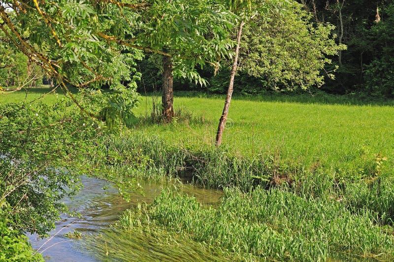Dolina krajobraz z popiółem i wierzbowymi drzewami zdjęcia stock