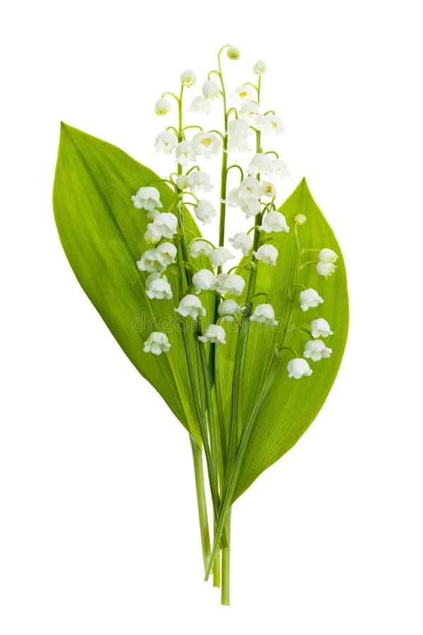 Download Dolina kwitnie na bielu obraz stock. Obraz złożonej z flory - 30898115