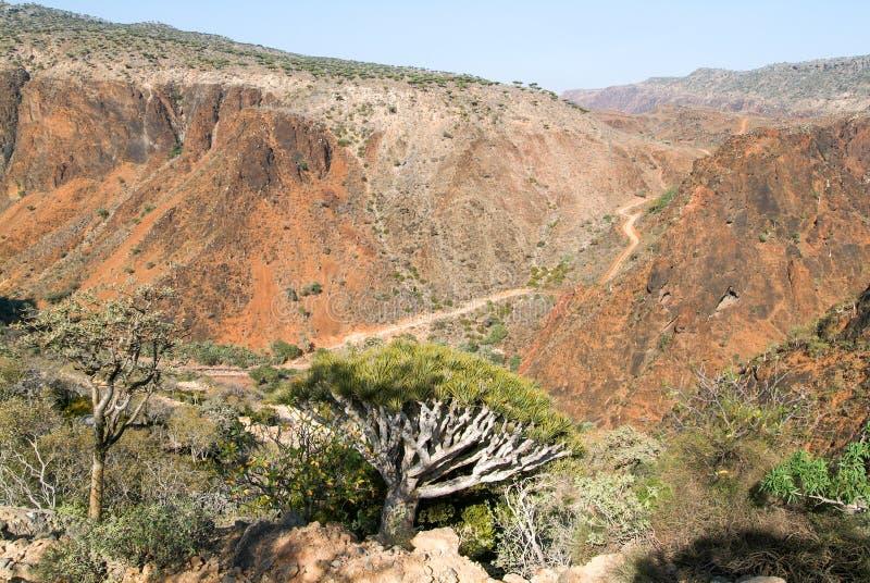 Dolina w górach przy centrum Socotra wyspa obraz royalty free