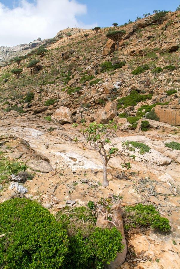 Dolina w górach przy centrum Socotra wyspa obrazy royalty free