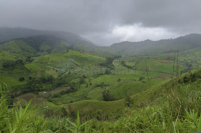 Dolina zielonego ryżu w krajobrazie fotografia stock