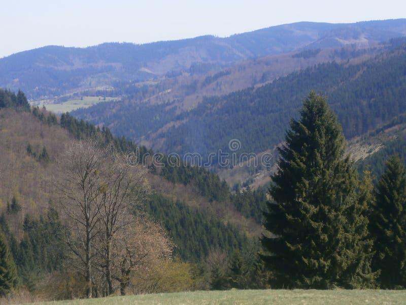 Dolinna panorama zdjęcia royalty free