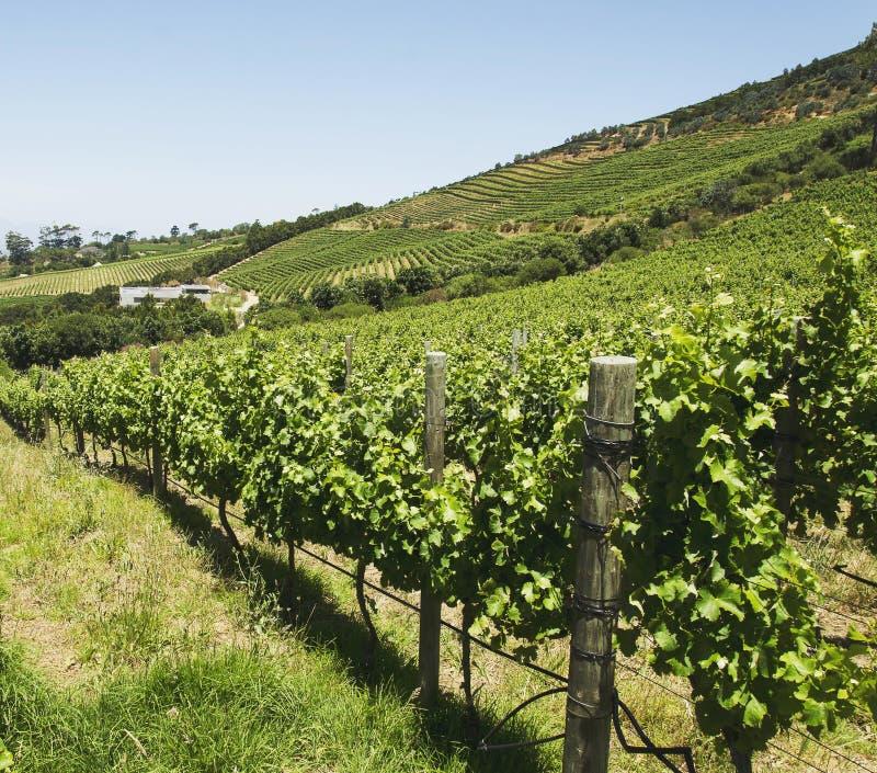 Dolinny winnica w Kapsztad, Południowa Afryka zdjęcia stock