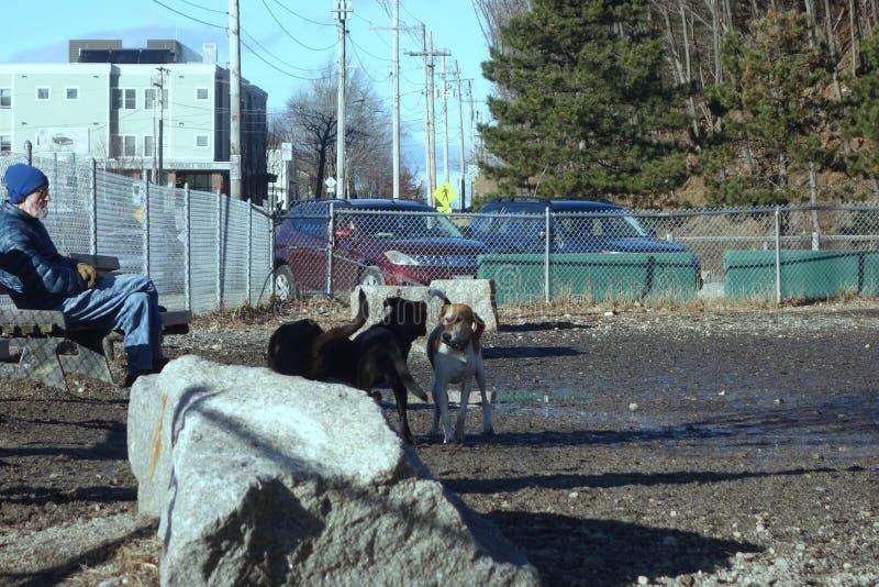 Doliny St psa park, Portland, Maine, Grudzień 29, 2018 fotografia stock