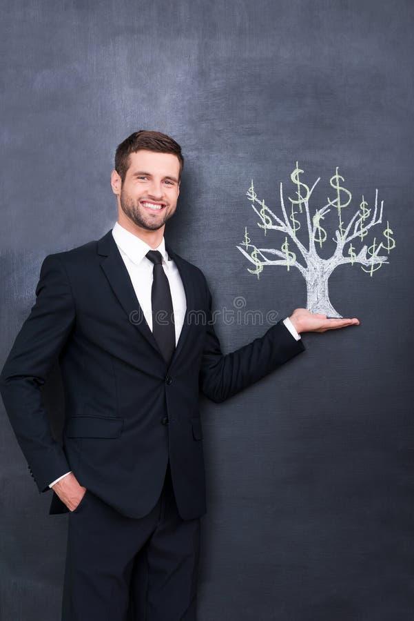 Dollar auf einem Baum stockfotografie