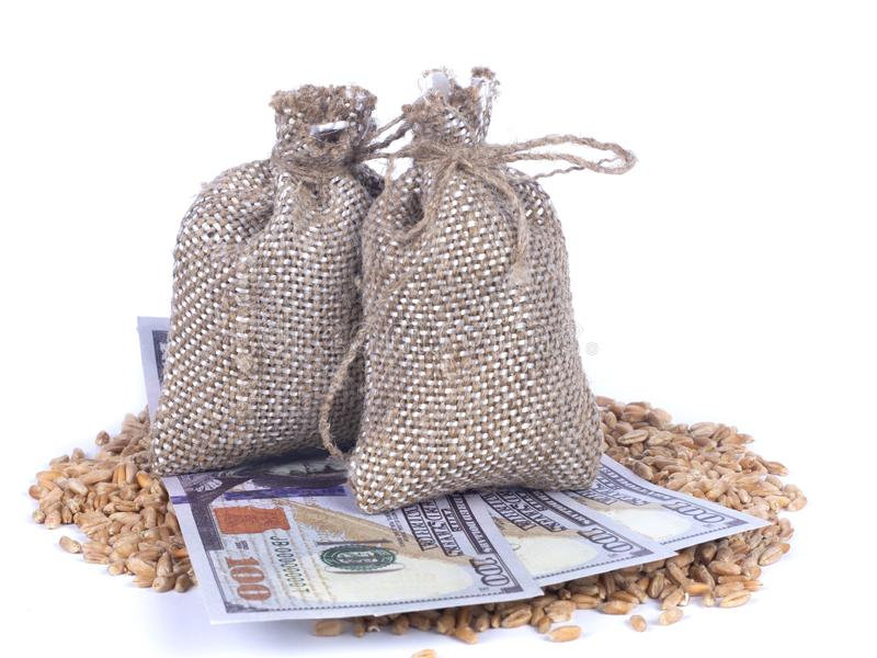 Dollar banknotes among wheat grains under the sacks of grain on white background. Agricultural job, price change concept stock photography