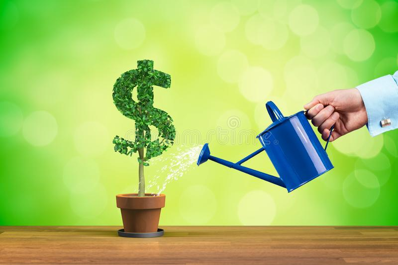 Dollar income growth. Concept. Income growth represented by plant in shape of dollar symbol watered by CFO, investor, stockholder and similar business person royalty free stock photography