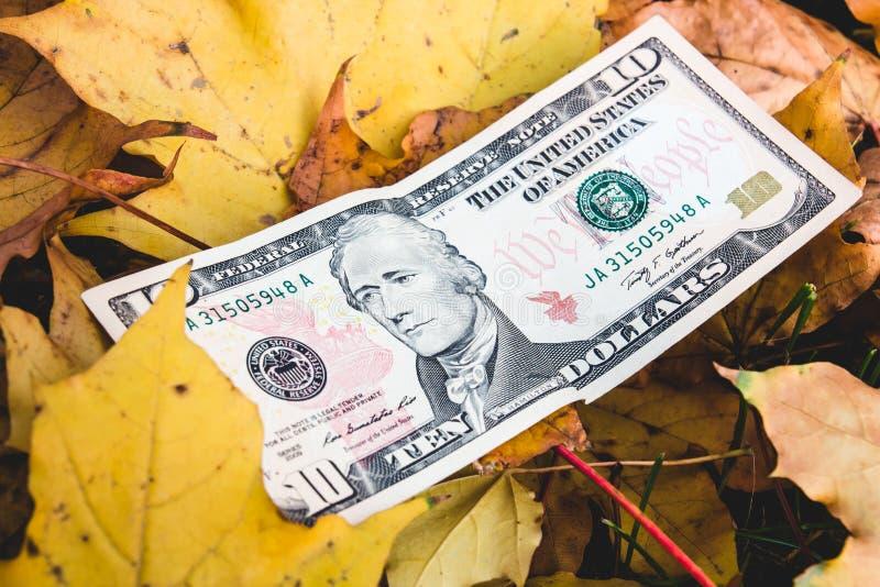Dollar liegen auf dem gefallenen gelben Blatt, Konzept der Verringerung des p stockfoto