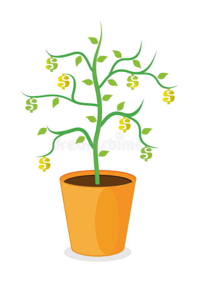 Dollar Plant Stock Image