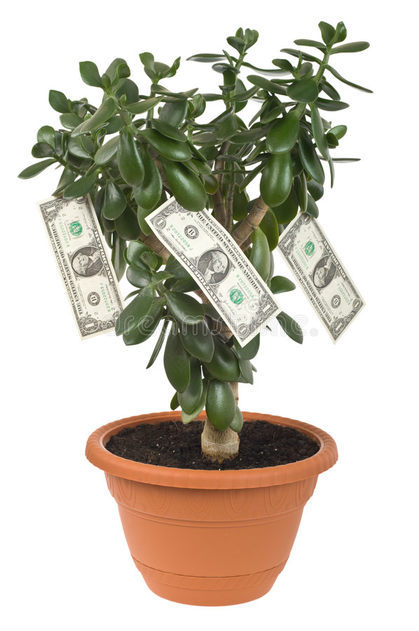 Download Dollar plant cutout stock photo. Image of benefit, soil - 3904084