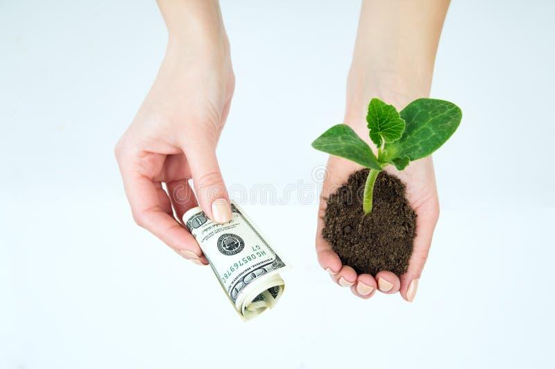 Dollar und ein Sämling in den Händen lokalisiert stockfoto