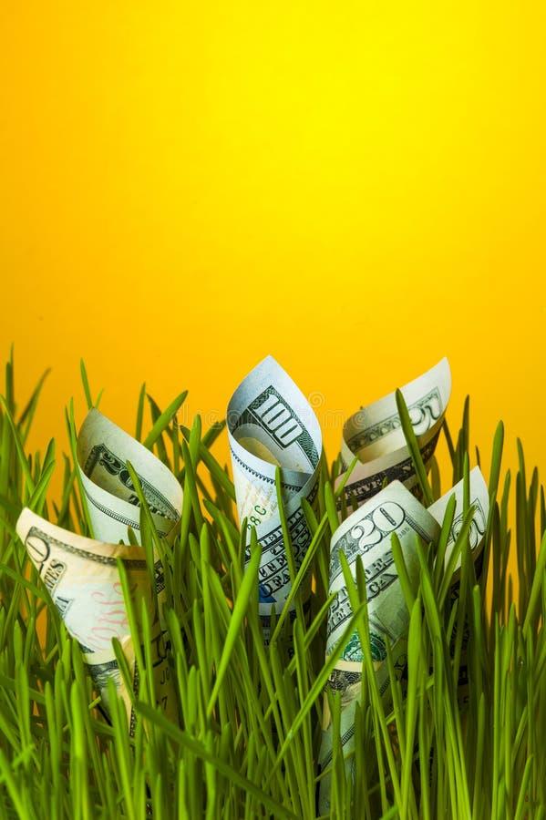 Dollari che crescono nell'erba verde Crescita di investimento immagine stock